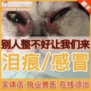 猫狗泪痕重治疗